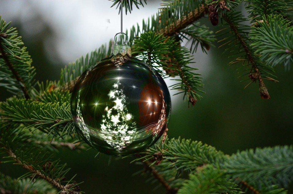 Ялинку у Броварах вже можна буде купити в грудні , фото-1