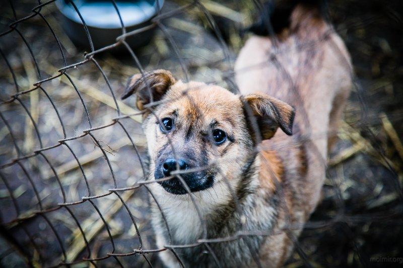 У Броварах на будування притулку для тварин виділили 1,5 млн грн , фото-1